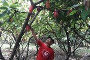 Sertifikat Tanah Gratis Maniskan Nasib Petani Kakao dan Nelayan