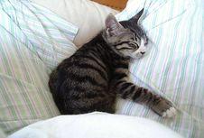 Kenapa Kucing Suka Bermanja dan Meremas Tuannya? Sains Jelaskan