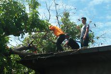 40 Pohon Tumbang akibat Puting Beliung di Padang