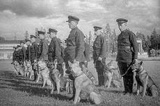 Saat Uni Soviet Mengorbankan Anjing untuk Mengalahkan Tank Jerman