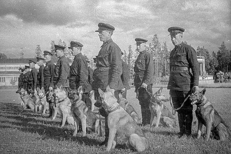 Pasukan anjing bunuh diri Uni Soviet
