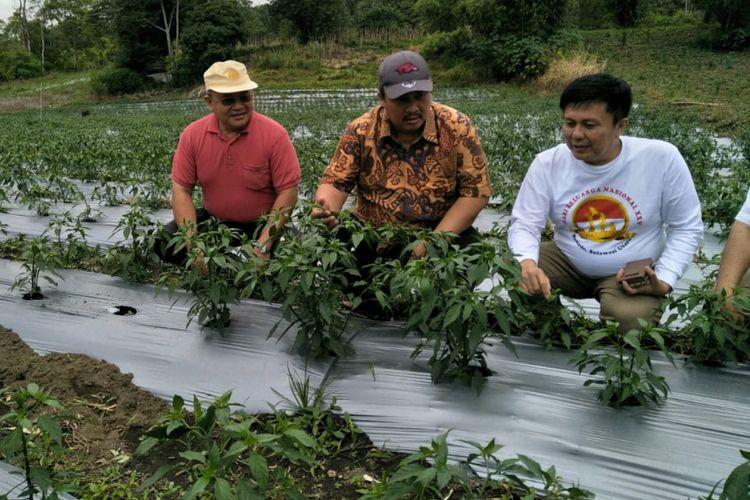 Pertanian cabai dan bawang di Minahasa, Sulawesi Utara