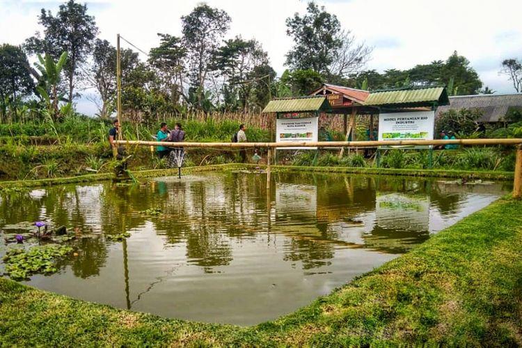 Musim Kemarau, Petani Bali Tetap Produktif Berkat Embung