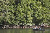 Tarik Ulur Antara Hutan Bakau dan Perubahan Iklim