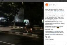 Lepas, Rusa dari TMP Kalibata Berlarian di Jalan Raya