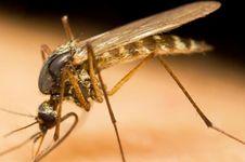 Perangi Malaria Kambuhan, AS Loloskan Obat Jenis Baru