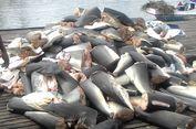 Jangan Percaya Mitos, Minyak Hati Ikan Hiu Tak Sembuhkan Kanker