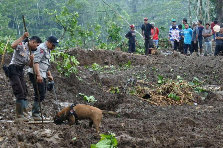 Anggota polisi dengan bantuan Unit Satwa K9 Polda Jawa Timur mencari korban bencana longsor di Desa Jambesari, Sumberbaru, Jember, Jawa Timur, Selasa (17/10). Polda Jawa Timur menurunkan tiga anjing pelacak untuk memaksimalkan pencarian tiga korban bencana longsor yang belum ditemukan.