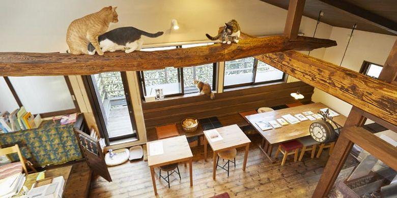 Ada 13 sampai 15 ekot kucing di kafe Kamakura Neko no Aida, Tokyo, Jepang. Kita bisa mengajak mereka bermain atau hanya melihat mereka yang sedang bercanda satu sama lain.