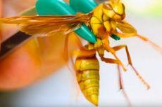 Seorang Youtuber Ungkap Serangga dengan Sengatan Paling Membakar