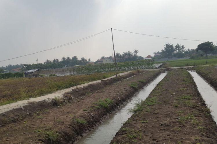 Lahan kebun sayur siap tanam yang dikelola Bagas Suratman di Tangerang, Banten.