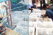 Polisi dan BKSDA NTB Gagalkan Penyelundupan Ribuan Burung ke Bali