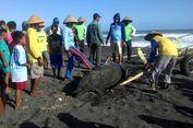 Seekor Lumba-lumba Ditemukan Mati di Teluk Maumere Flores