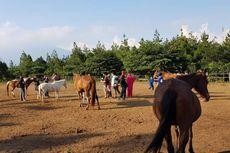 Sensasi Menunggangi Kuda di Kebun Bunga Matahari