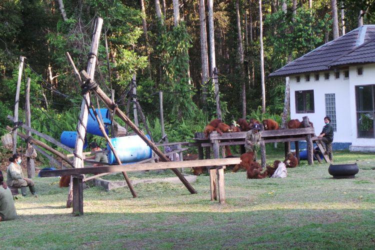 Suasana sekolah orangutan di pusat rehabilitasi Nyaru Menteng, Kalimantan Tengah. Foto diambil pada Senin (1/5/2017).(Kompas.com/Kurnia Sari Aziza) Artikel ini telah tayang di Kompas.com dengan judul