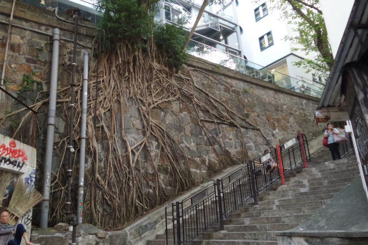 Salah satu spot street art serta pohon tua yang akarnya menempel di dinding. Terletak di kawasan Old Town Central, Hongkong.