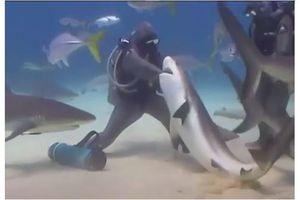Kisah 'Shark Lady', Bebaskan Hiu-hiu dari Jerat Kail di Mulut Mereka