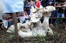 Ratusan Ribu Orang Meminta Keberuntungan dari Jamur Raksasa di China