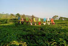 Perjalanan Pagilaran, Kebun Teh Indonesia yang Terkenal di Mancanegara