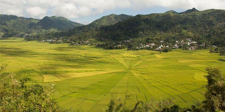 Desa Cancar di Kabupaten Manggarai Timur, Nusa Tenggara Timur.