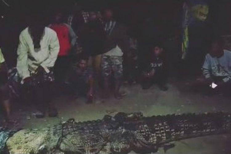 Buaya ditangkap setelah diburu 4 jam oleh BKSDA dibantu pawang di Sungai Tubo, Majene, Sulawesi Barat.