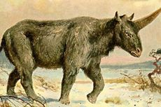 Kali Pertama, Peneliti Kuak Alasan Punahnya Unicorn Siberia