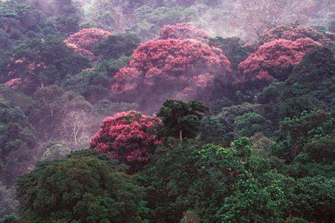 Hutan Ini Jadi Berbunga-bunga karena Perubahan Iklim, Bagaimana Bisa?