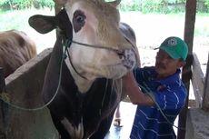 [POPULER NUSANTARA] Jokowi Beli Sapi Kurban 1 Ton Seharga Rp 85 Juta | Mahasiswa Termuda UGM Berusia 15 Tahun