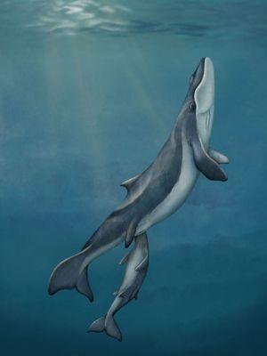 Ilustrasi paus Maiabalaena nesbittae yang hidup 33 juta tahun lalu dan memiliki mulut pengisap.
