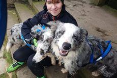 Patah Kaki saat Joging, Perempuan Ini Selamat Berkat Dua Anjing Peliharaannya