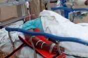 Digigit Ular Kobra, Petugas Pemadam Kebakaran di Malaysia Tewas