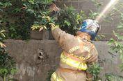 'Seabrek' Tugas Pemadam Kebakaran: Padamkan Api, Tangkap Biawak hingga Melepas Cincin