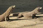 Perhatikan 5 Hal Ini saat Berkunjung ke Taman Nasional Komodo