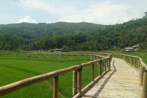 Lagi Ngehits! Wisata Sawah Sukorame Jadi Potensi Wisata Bantul