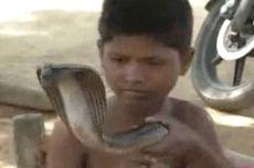 Bocah 7 Tahun Pilih Ular Kobra sebagai Teman Bermain
