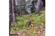 Viral Video Tanah 'Bernapas' di Kanada, Begini Fakta Ilmiahnya