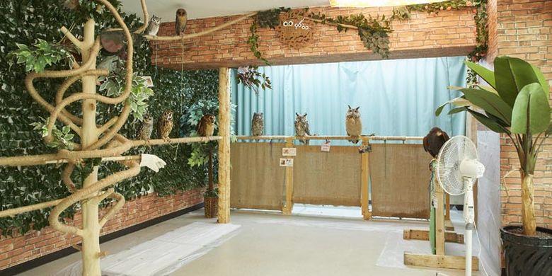 Kafe burung hantu, Sounan Fukuro Park di Tokyo, Jepang ini dibuka tahun 2014. Saat ini terdapat 10 ekor burung hantu berukuran besar dan kecil.