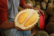 Desember-Februari, Waktu Terbaik Berburu 'Durian Borongan' di Rumpin