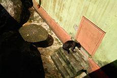 Viral Foto Beruang Madu Kurus di Kebun Binatang Sinka Island Park, Ini Langkah BKSDA