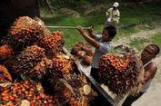 Lawan Diskriminasi Sawit Uni Eropa, Indonesia PDKT 5 Firma Hukum