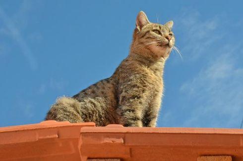 Di Kosta Rika, Kucing Dipakai untuk Selundupkan Ponsel ke Penjara
