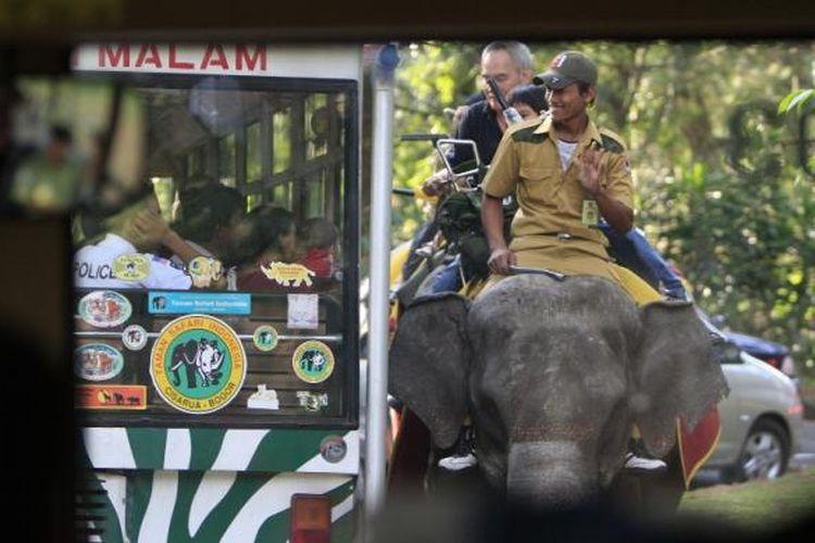 ILUSTRASI - Pengunjung menggunakan bus khusus berpapasan dengan gajah saat melintasi kawasan Taman Safari Indonesia, Cisarua, Bogor, Jawa Barat, Senin (21/9/2009). Saat libur Lebaran, tempat wisata ini mengalami lonjakan pengunjung yang drastis. Jalur safari untuk melihat langsung hewan liar terlihat padat dibanding hari biasa.