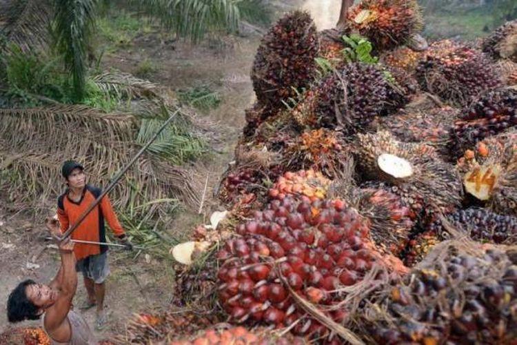 Ilustrasi kelapa sawit