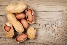 Kacang Camilan Sehat Sumber Protein dan Vitamin