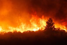 Kebakaran Hutan di Brasil Catatkan Rekor Terbaru pada Tahun Ini
