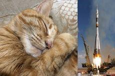 Abu Kremasi Kucing Bernama Pikachu Akan Diluncurkan ke Ruang Angkasa
