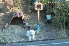 Anjing Berjuluk Hachiko Yunani Ini Menunggu di Lokasi Kecelakaan Majikan Selama 18 Bulan