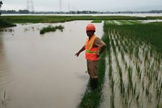 Gerak Cepat Pemda Atasi Banjir di Lahan Pertanian