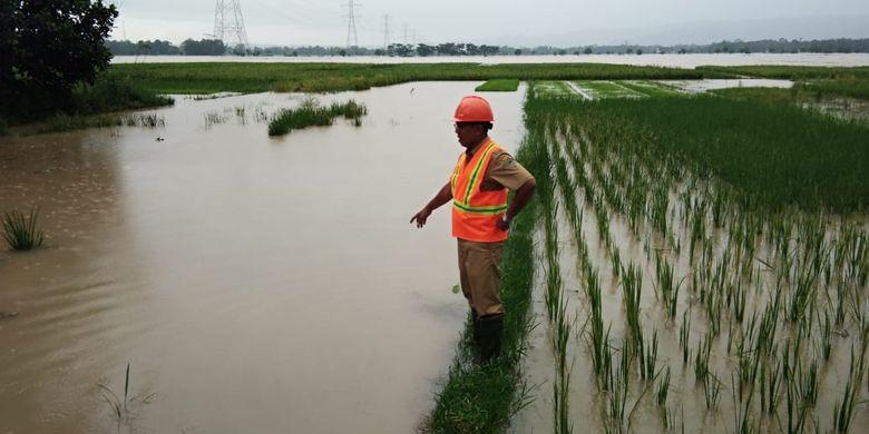 CEK LAHAN PERTANIAN: Petugas UPT DPU Wilayah Sumpiuh, Kabupaten Banyumas, Jawa Tengah, mengecek lahan pertanian yang terendam banjir, Selasa (19/3/2019).