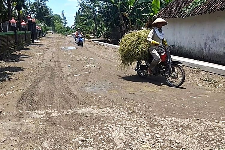 Petani Desa Jajar memanen padi mereka pasca diterjang banjir luapan Sungai Madiun. Petani mengaku merugi karena hasil panen mereka dibeli dengan harga murah oleh pedagang dengan alasan kualitas padi yang menurun.